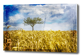 Single tree in a wheat field