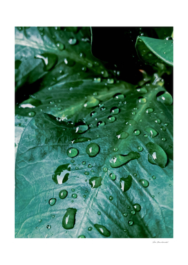 Closeup green leaves plant texture with drop of water