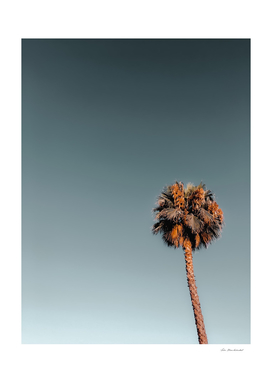 Isolated palm tree in summer with blue sky