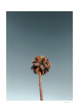 Isolated tropical palm tree in summer with blue sky