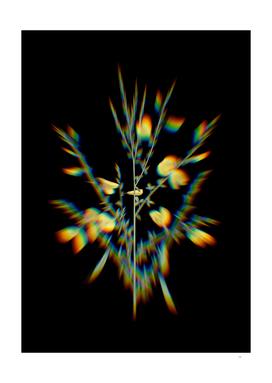 Prism Shift Yellow Broom Flowers Botanical Illustrati