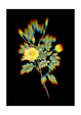 Prism Shift Yellow Sweetbriar Rose Botanical Illustration