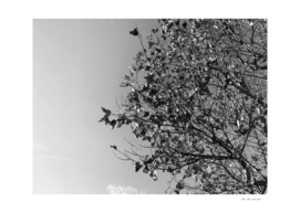 tree branch with clear sky background in black and white
