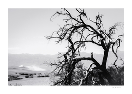 tree branch in desert at Death Valley national park