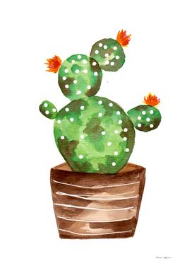 Orange Blossoms Cactus