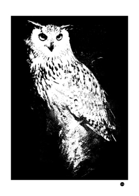 Nocturnal Wisdom Owl Design
