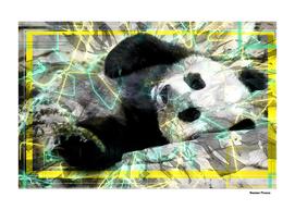 Panda animal street art retro