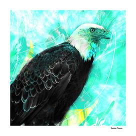 Eagle Animals Nature Vintage Street Art