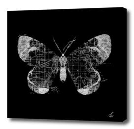 Butterfly Wanderlust