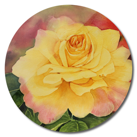 Rose - Yellow  on red