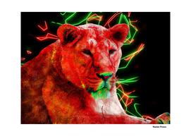 Lioness Animals Nature Colored Neon