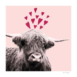 Highland Cow Valentines Day #1 #love #decor #art