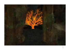 Tree | Gorge