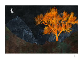Tree | Foothills