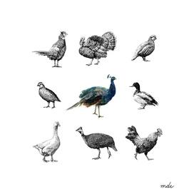 Bird Farm
