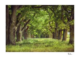 Oak Tree Alley
