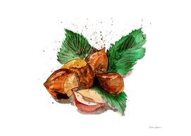 Hazel Nuts Watercolor