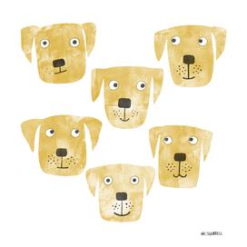 Golden Labrador Retriever Dogs