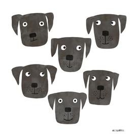 Black Labrador Retriever Dogs