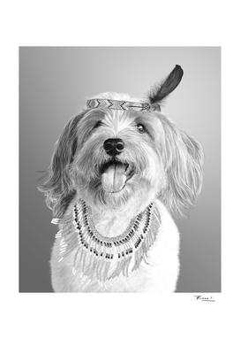 Tribe dog Onyx