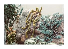 Crawling Cacti