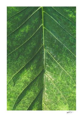 Textured Tropics