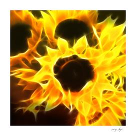 Flame Petal Sunflower