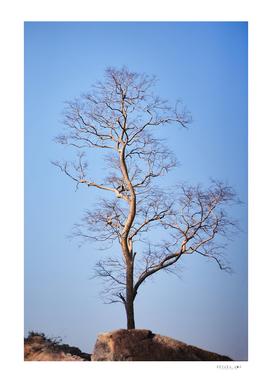 Big dead tree and blue sky