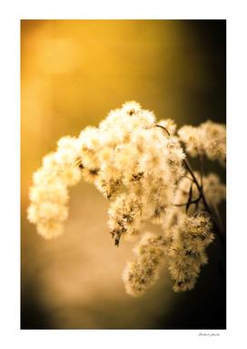 Douceur fleurie