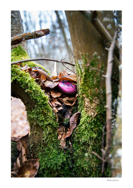 Les trésors de la forêt
