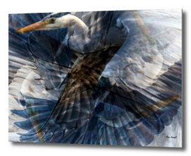 Wild Heron Flight