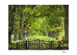 Oak Trees & Old Gate