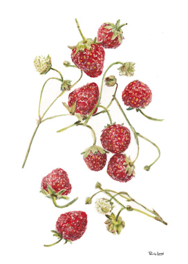 Grandmas Strawberries