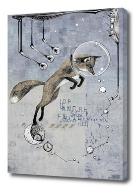 Relativity Fox Trot