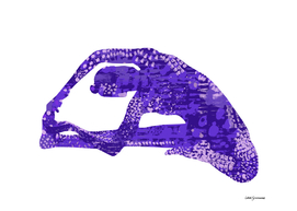 Parivrtta Janu Sirsasana in Purple