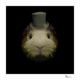 Worried Guinea Pig