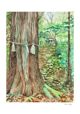 Shimenawa, sacred rope around tree