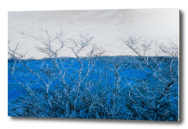 Abstraction from dry branches on a blue background.