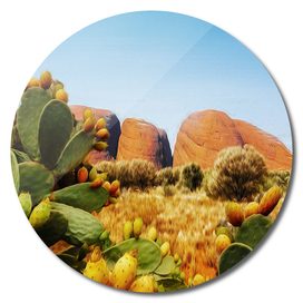 Bright landscape from the valley of cacti.