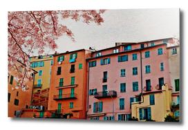 Blooming sakura against  of multi-colored facades.