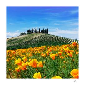 Vineyard in Tuscany.