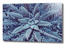 Frosty plant.