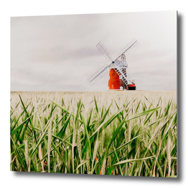 A grain field with green ears on the background of the mill.