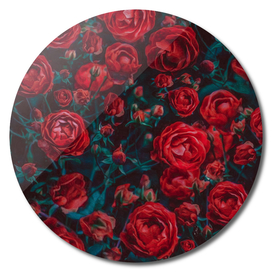 Abstract background from a bush of red roses.