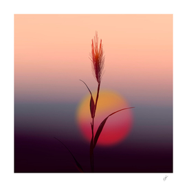 A spike of wheat against the backdrop of the setting sun.