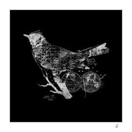Bird Wanderlust
