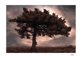 Tree of Dionysus