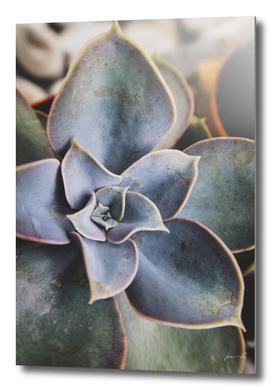 close up of succulent