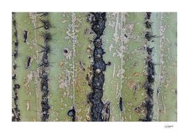 Saguaro Skin