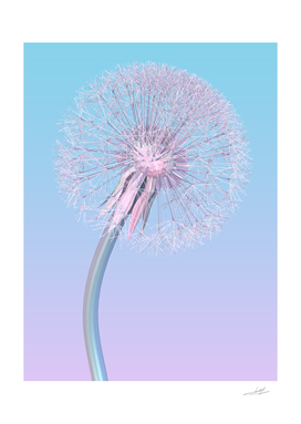 dandelion in pale pink blue color